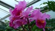 Orchids -Latitude 23