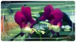 Processed through Fotor Online