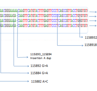 Representative data  of sequences analysis of the PTEN gene in colorectal patients