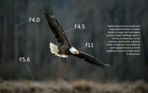 CAMERA SETTINGS FOR BALD EAGLE PHOTOGRAPHY – LESSON #1 OF 5