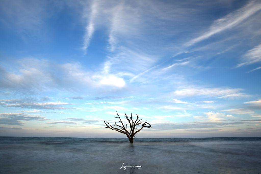 Isolated Tree on the South Carolina Coast