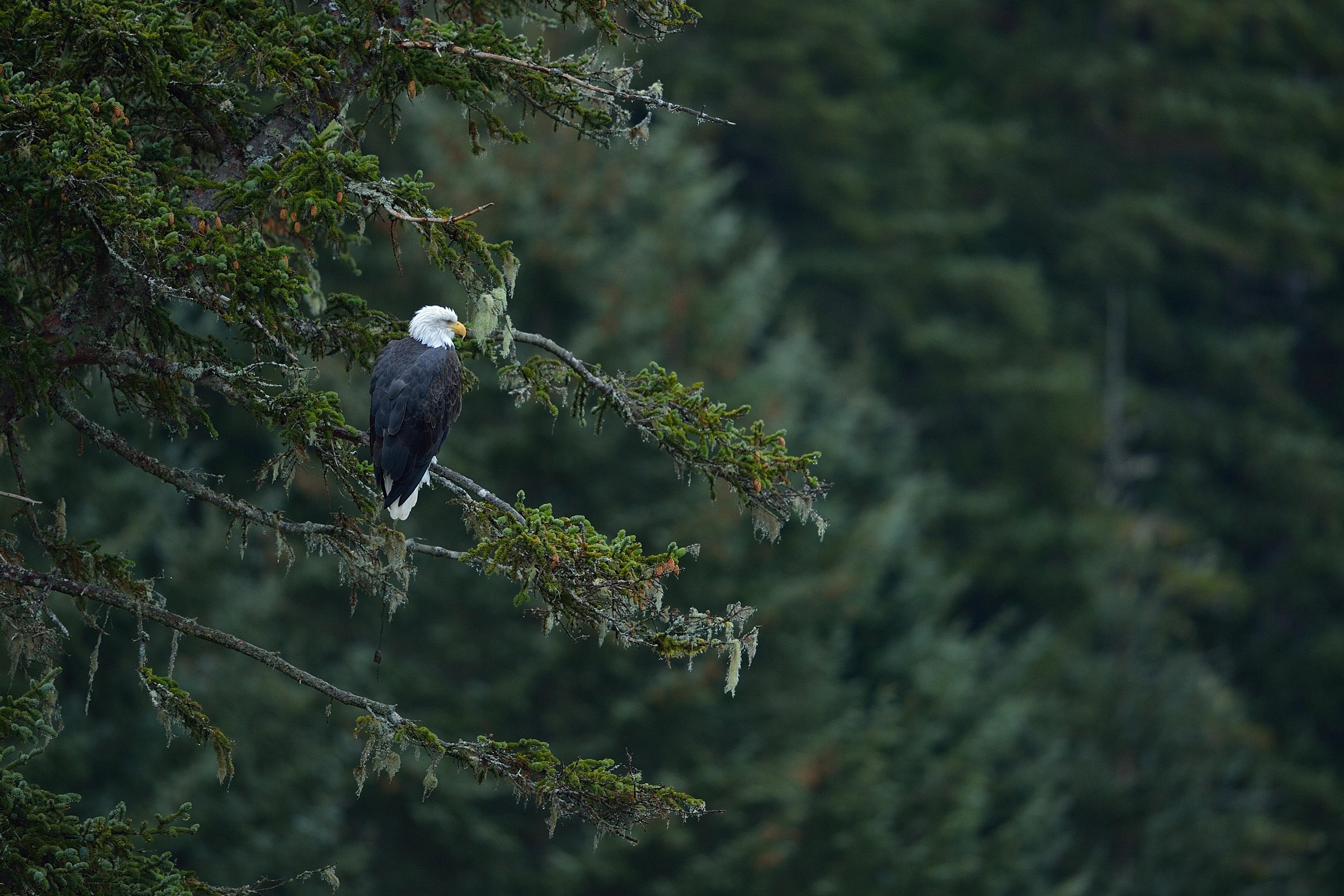 Bald Eagle Overlook