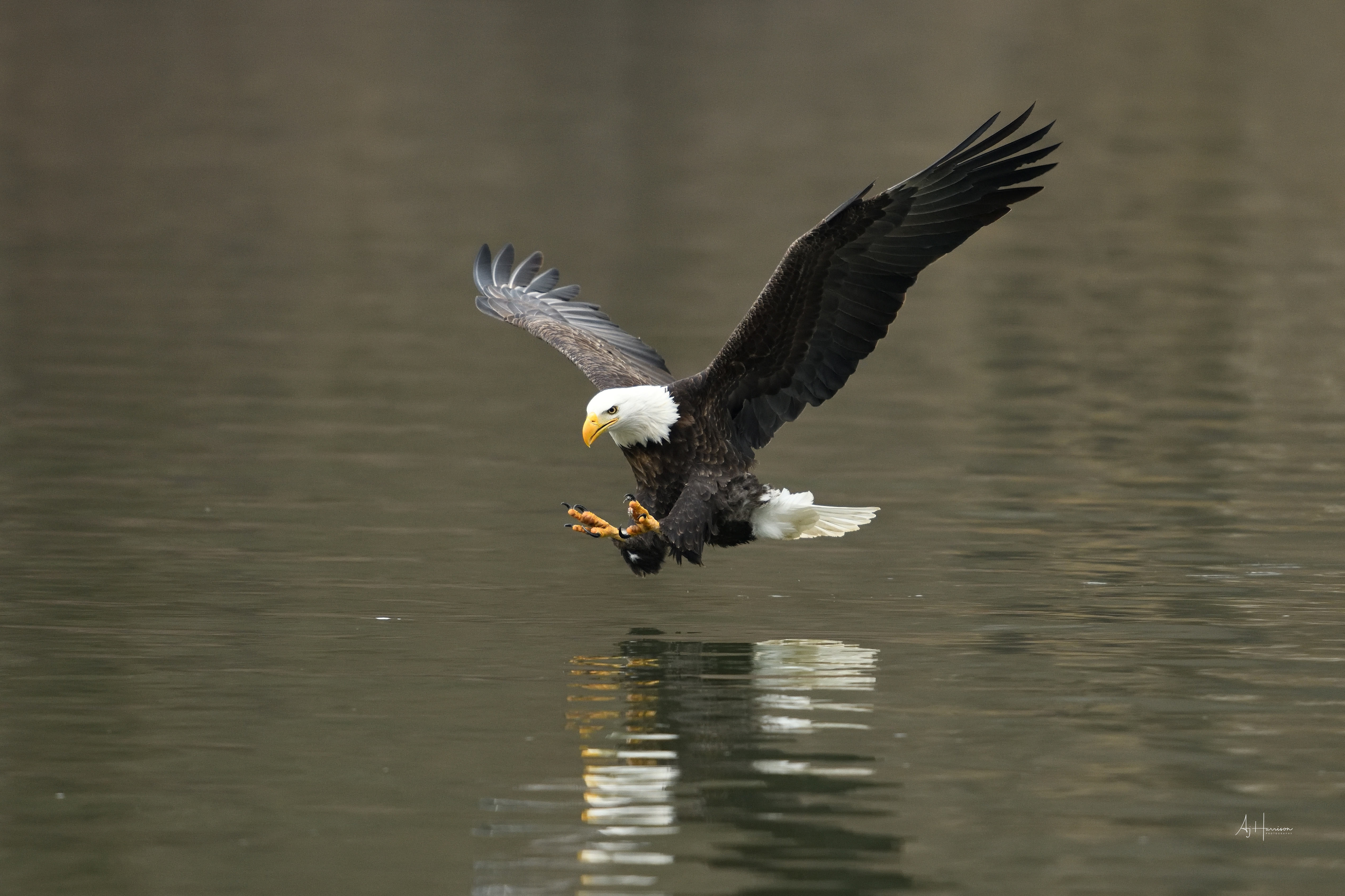 CAMERA SETTINGS FOR BALD EAGLE PHOTOGRAPHY – LESSON #5 OF 5