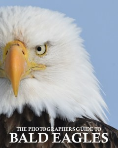 THE PHOTOGRAPHERS GUIDE TO BALD EAGLES