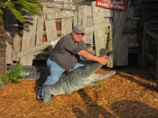 Jimmy takes on a gator