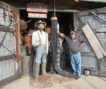 Jimmy beats the gator