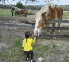 The horses and mules take all offers of carrots.