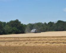 Winter wheat harvested