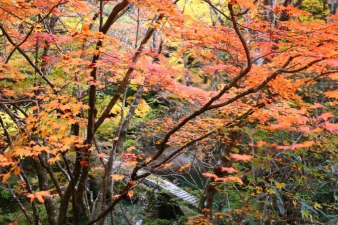 小田深山渓谷 紅葉