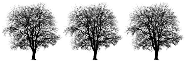 Winter Tree Triptych, Photo by Allan J Jones