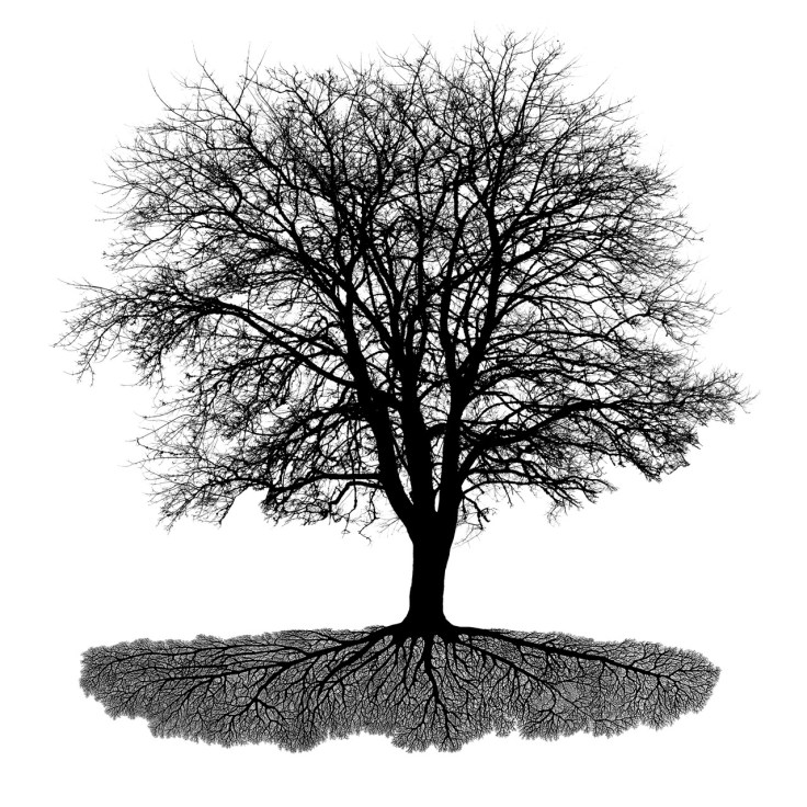 Tree with Roots, composite photo and hand drawn roots, by Allan J Jones
