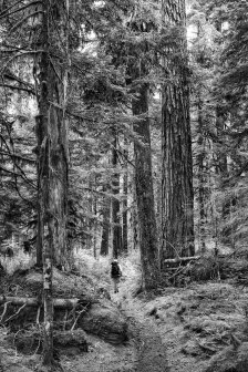 N Fork Skokomish Trail, Olympic National Park, 5July2016, Photo by Allan J Jones