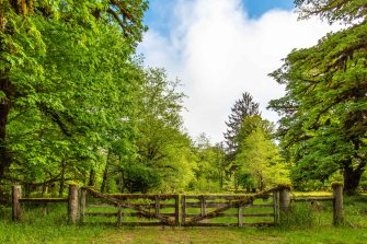 Mossy Gate, South Shore Rd, Quinault WA, Photo by Allan J Jones