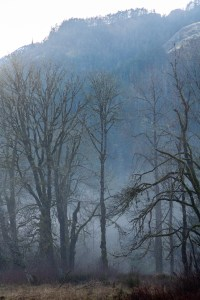 Winter Mists on the Elwha by Allan J Jones Photography