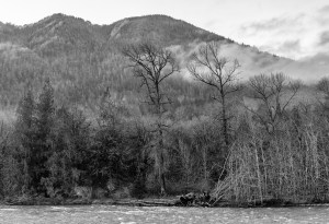 Elwha River, west side and ridge by Allan J Jones
