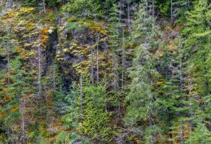 Quilcene River Canyon Wall by Allan J Jones