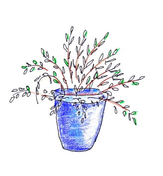 Willow in glazed blue pot
