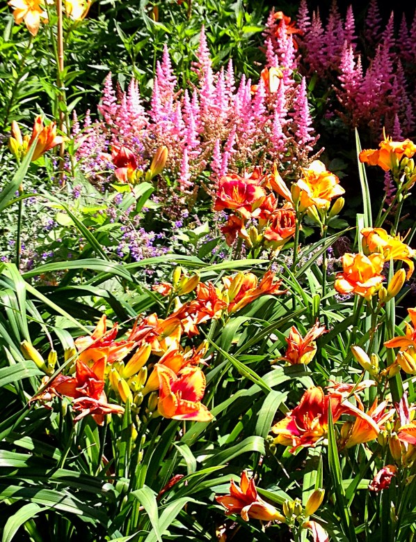 photo of pink astilbe and orange daylilies