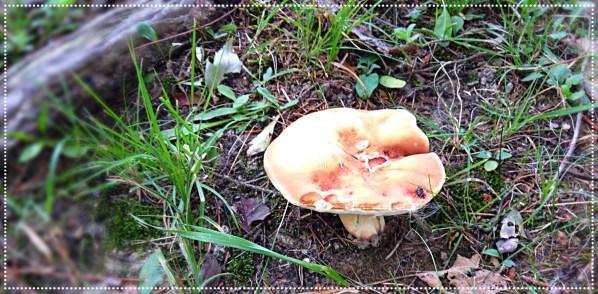 Photo of beige colored wild mushroom