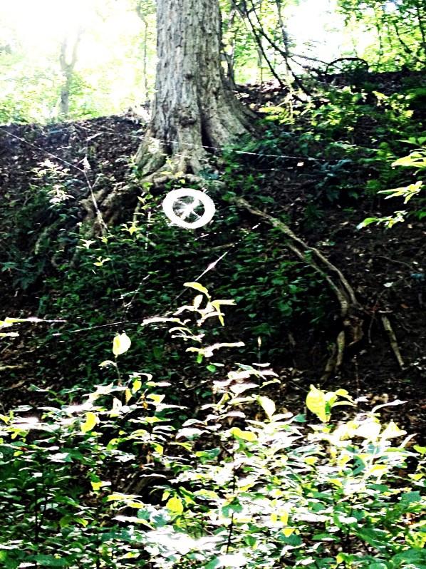 Photo of spider web