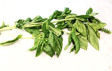 stem of basil