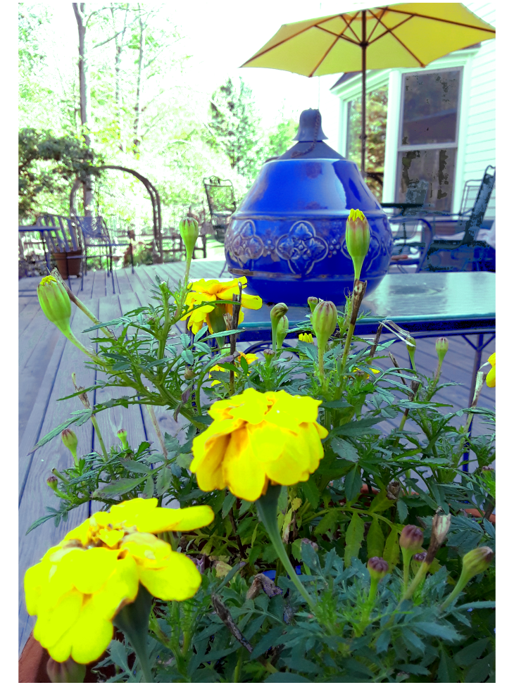 Blue fire jar and yellow marigolds