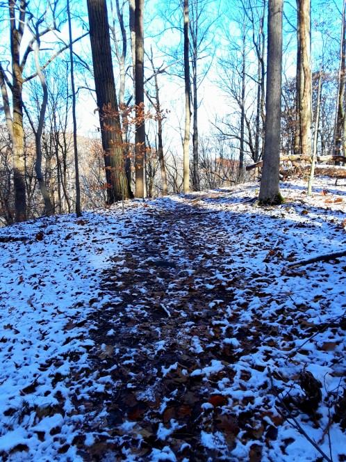 path through bare trees
