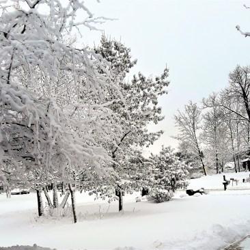 snowfall covers a suburban neighborhood