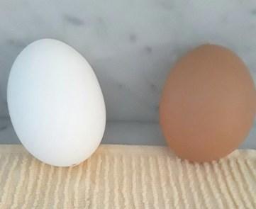 white egg and brown egg drying on dishtowel