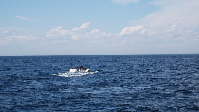 A whale tail pops out of the ocean.
