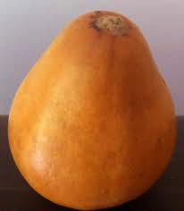 a traditional mate pumpkin looks like a cross between a gourd and a pumpkin