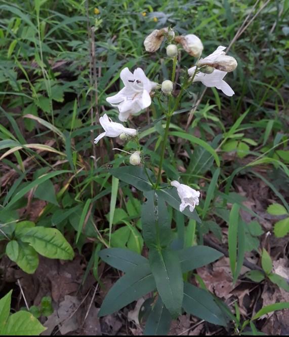 White flowers along long stem