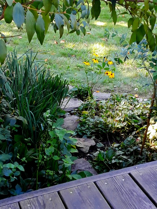 Stones set as a path among the plants in the border