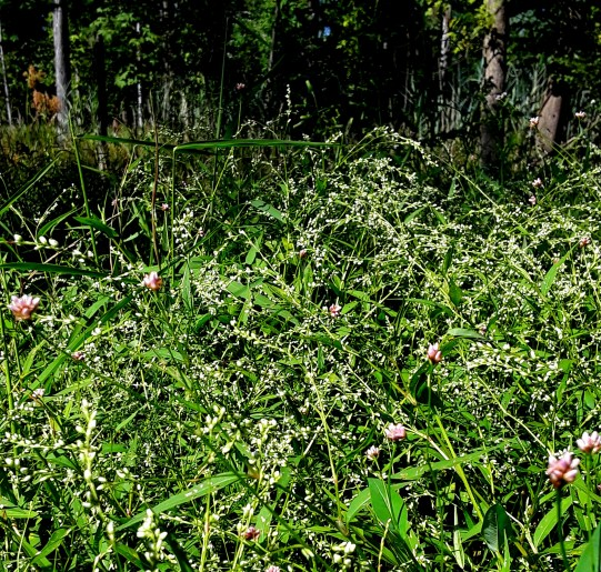 A mass of wildflowers in a wooded field