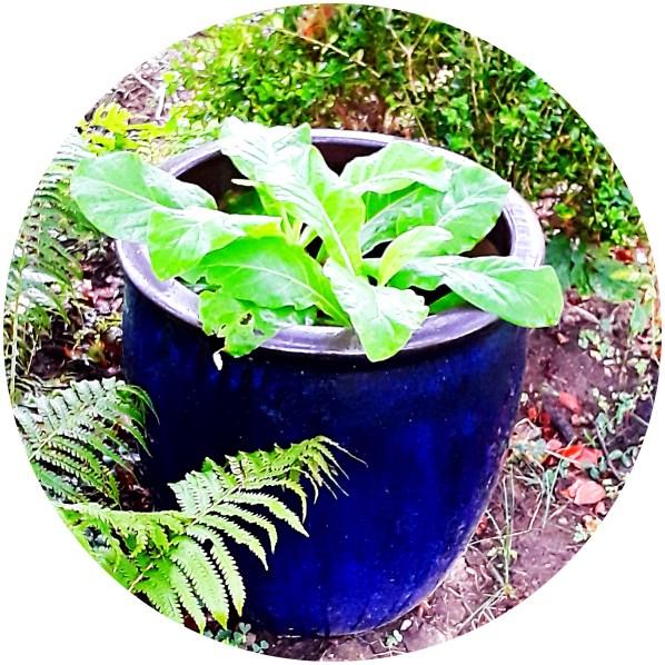 this pot is glazed a Mediterranean blue