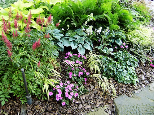 ostrich fern, astilbe, hosta, and impatiens mounded in a border