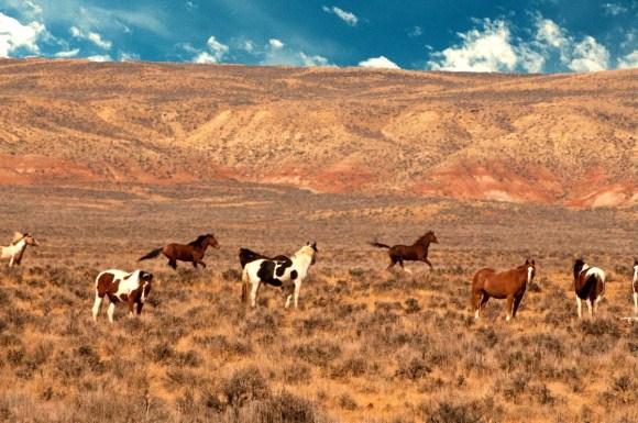 "Rene Cloutier ""Wild Horses"""