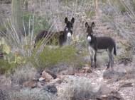 "Ann Dewing ""Two Donkeys"""