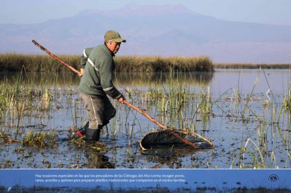 Hay ocasiones especiales en las que los pescadores de las Ciénegas del Alto Lerma recogen peces, ranas, acociles y ajolotes para preparar platillos tradicionales que comparten en el núcleo familiar
