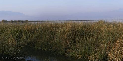 Ciénega de Chiconahuapan en Almoloya del Río, Estado de México, dentro del Área de Protección de Flora y Fauna Ciénegas del Lerma