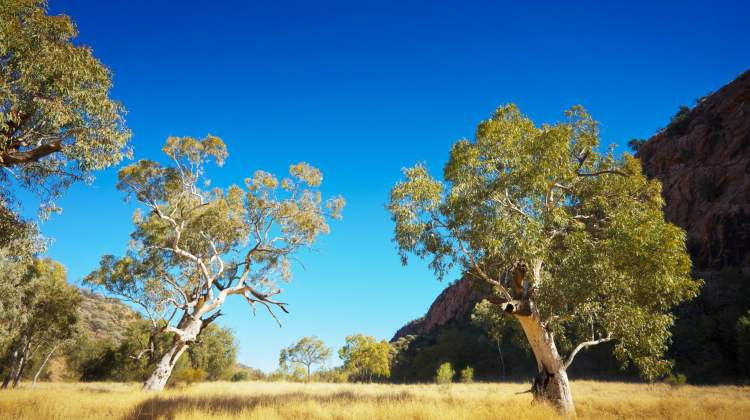rural pharmacy: pretty rural scene with gum trees and blue sky