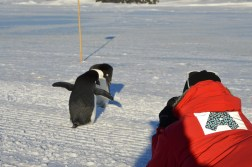 Abe photographs Adélie Penguins up close and personal. © L. Roberts
