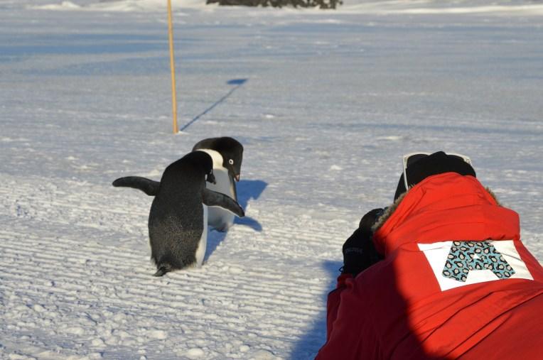 Abe photographs Adélie Penguins up close and personal. © L. Roberts