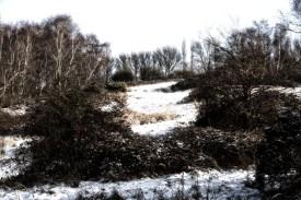 Snow-19-Edit