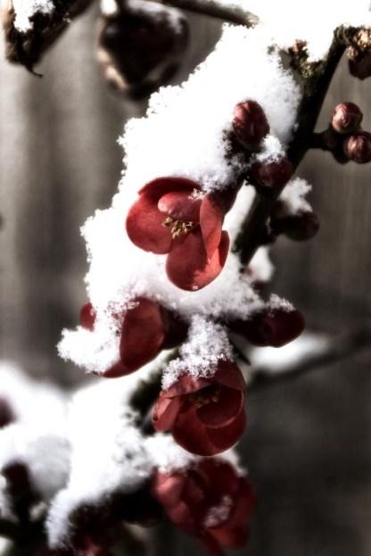 Snow-4-Edit
