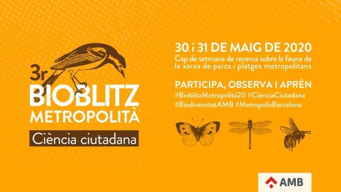 Badalona participa aquest cap de setmana en el 3r Bioblitz Metropolità de recerca sobre la fauna i la flora de la xarxa de parcs i platges metropolitanes