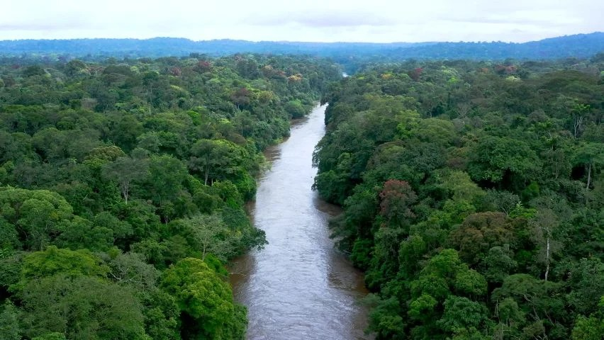 Tropical forests are some of the richest, most exciting areas on earth. Green Forest Equatorial Guinea Stock Video Footage 4k And Hd Video Clips Shutterstock