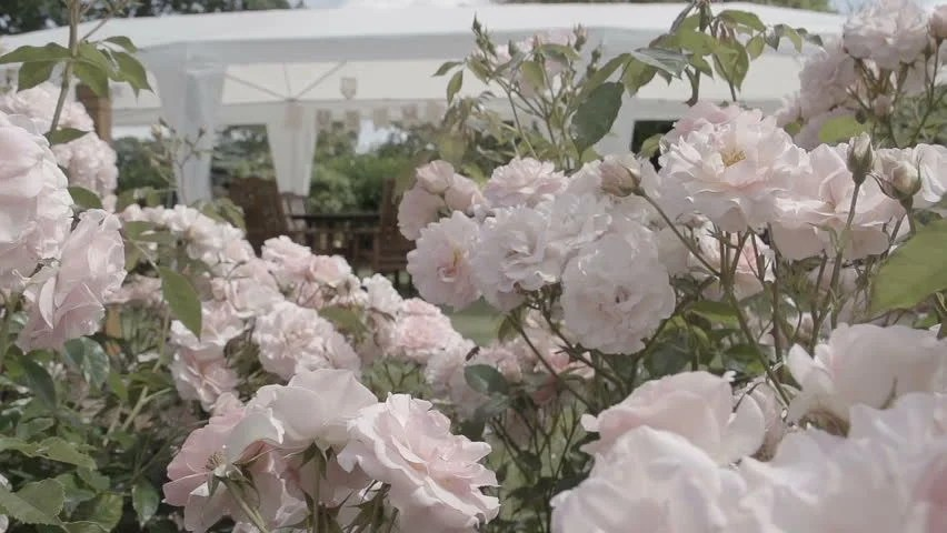 Wedding Borders Footage Page 3 Stock Clips