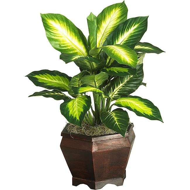 Shop Silk Golden Dieffenbachia Plant With Wood Vase Free Shipping Today 3703643