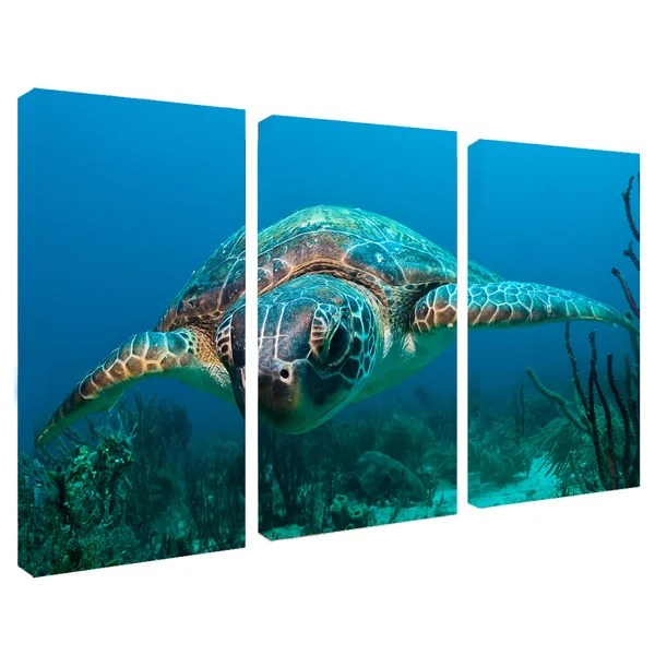 Chris Doherty Turtle 3 Piece Canvas Art Set Blue